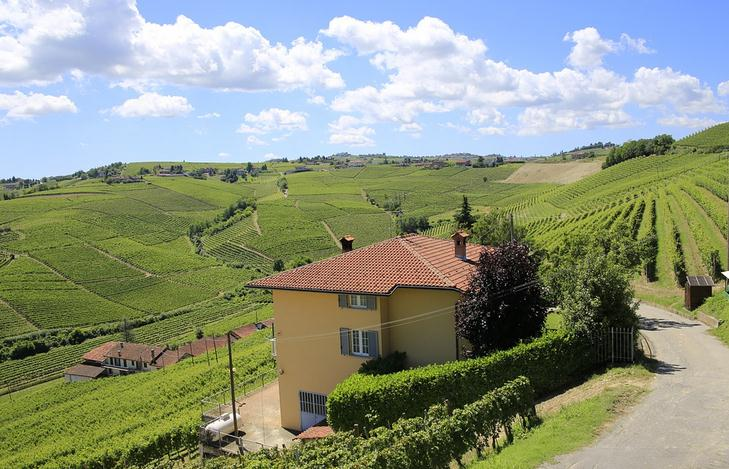 Piedmont vineyard, Italy, wide vineyard, a vineyard with a house
